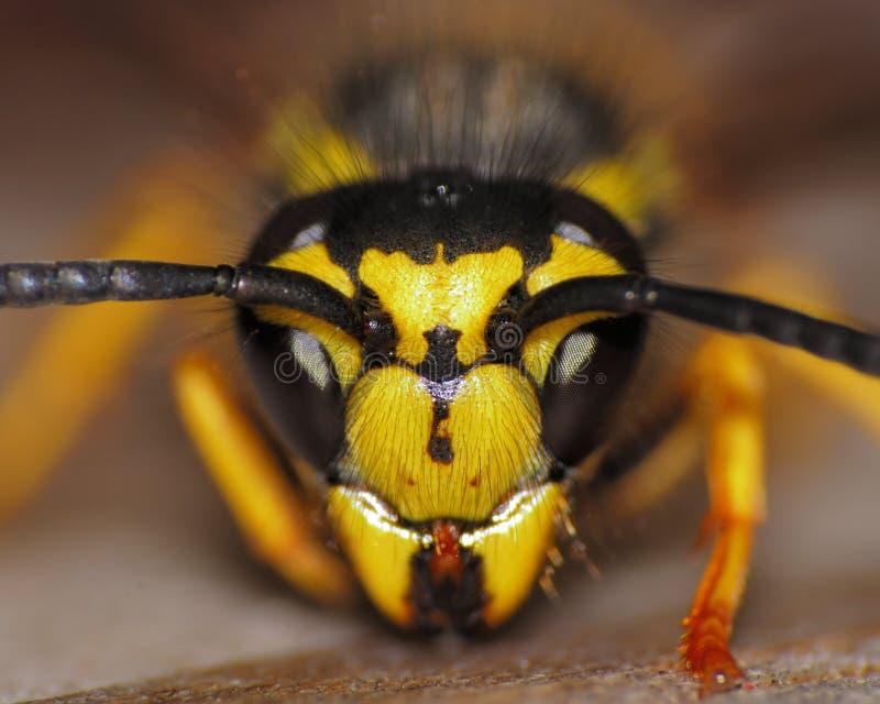 vespa del Giallo-rivestimento immagine stock