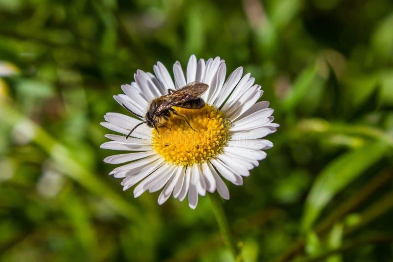 Vespa e fiore immagine stock