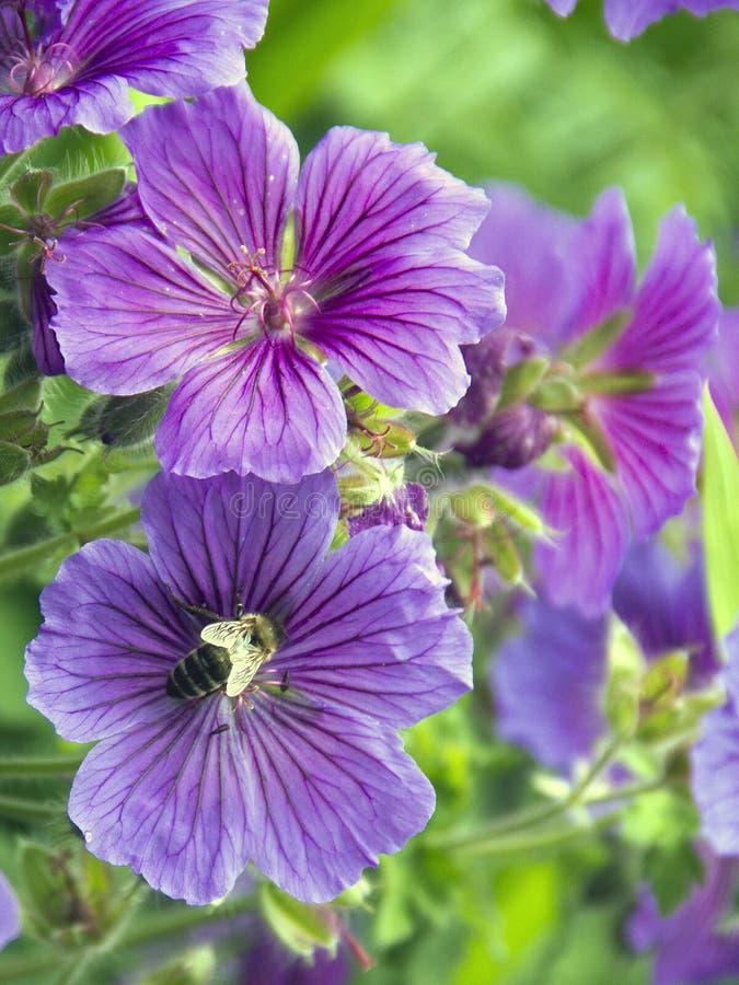 Vespa em uma flor imagem de stock