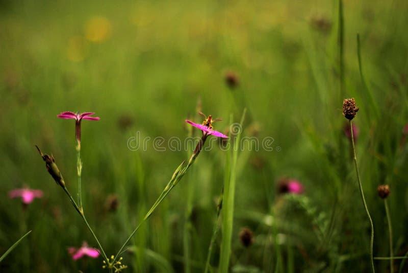 A vespa pequena senta-se na flor foto de stock