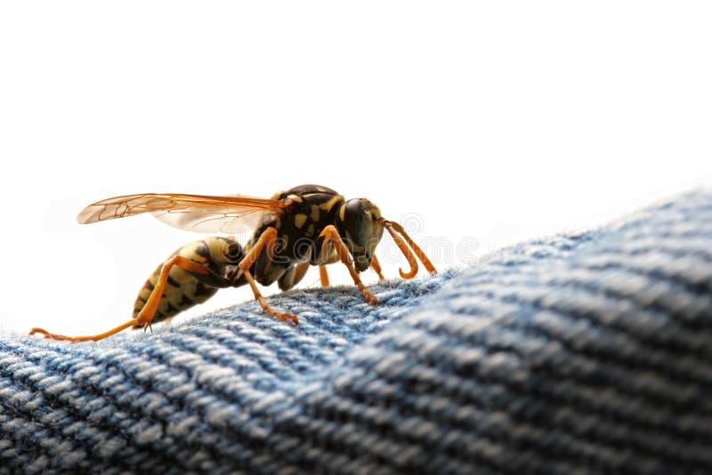 vespa - perigo de espreitamento foto de stock