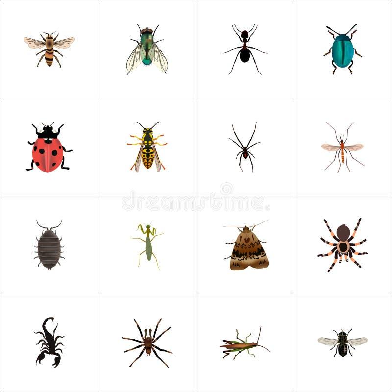 Vespa realistica, aracnide, Midge And Other Vector Elements L'insieme dei simboli realistici dell'insetto inoltre include la form royalty illustrazione gratis