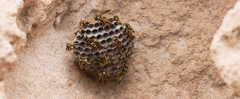 Vespas na praia Colmeia da vespa do close-up no fundo de pedra Croped fotografia de stock royalty free