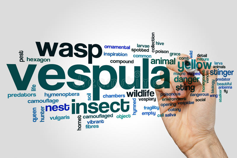 Vespula word cloud. Concept on grey background stock image