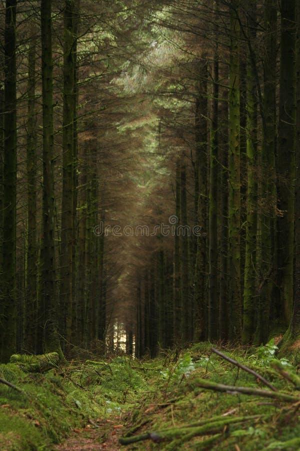 Vestíbulo de árboles foto de archivo libre de regalías