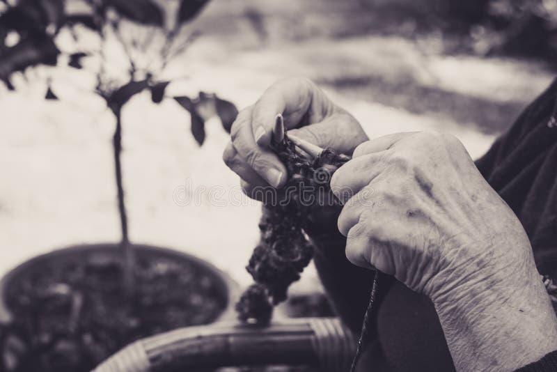 vestida nas mãos da velha senhora para tricô fotografia de stock royalty free