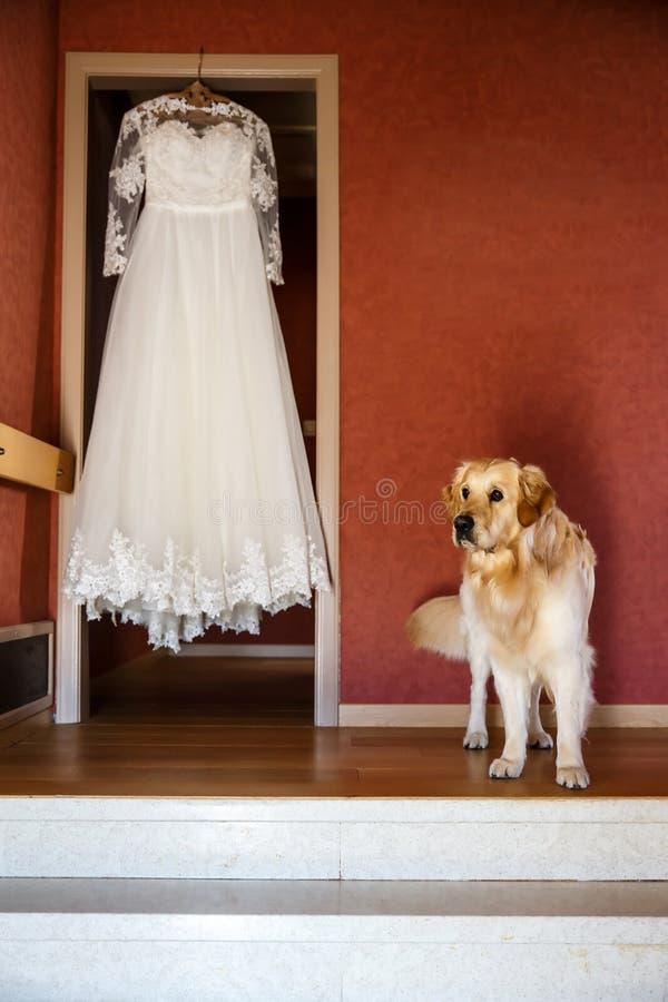 Vestido de casamento que pendura em um gancho e em um cão bonito foto de stock