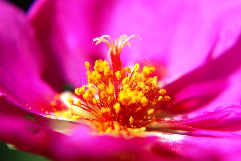 Vestido de pistil floral foto de stock