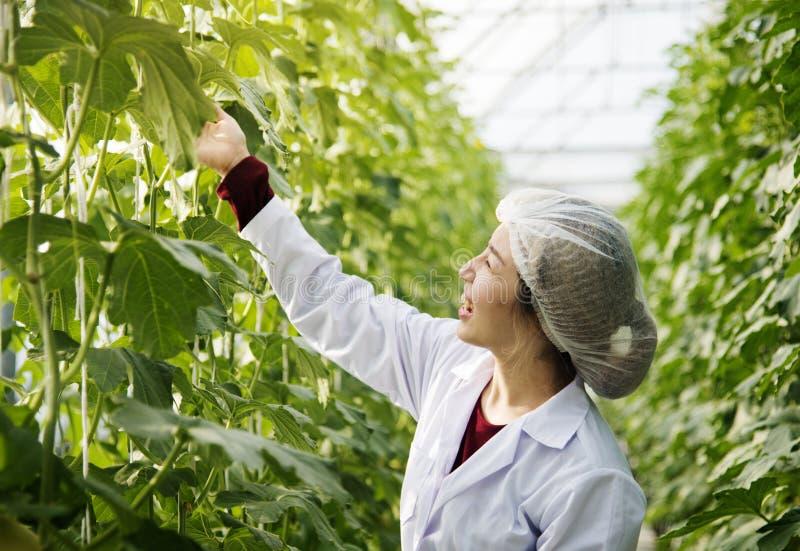 Vestido que lleva de la mujer en plantas del estudio del invernadero fotos de archivo libres de regalías