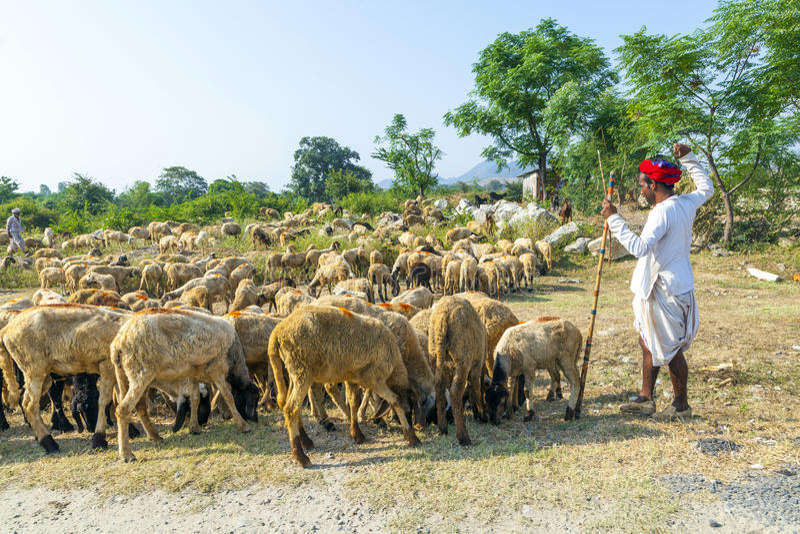 Vestir tribal do homem de Rajasthani foto de stock