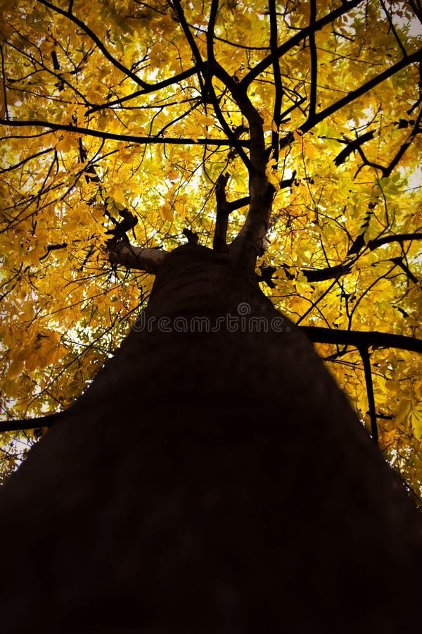 Vestito da autunno fotografia stock libera da diritti