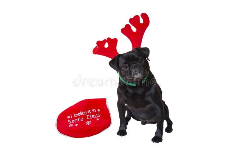 Vestuário vestindo 3 do Natal do Pug preto foto de stock royalty free