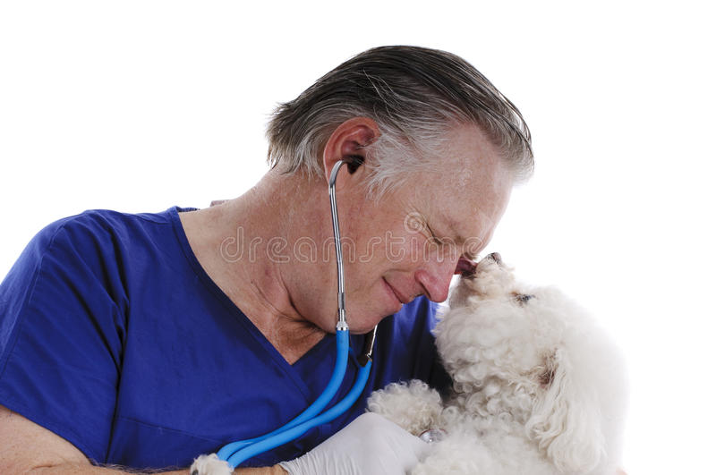 Vet With Bichon Frise Stock Image