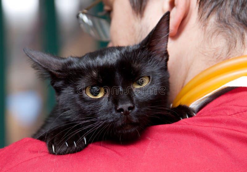 Vet Caressing Cute Black Cat Stock Photos