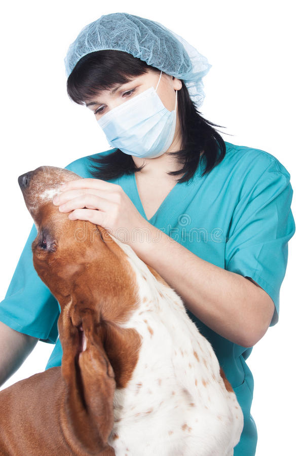 Vet Checking A Dog Stock Photo
