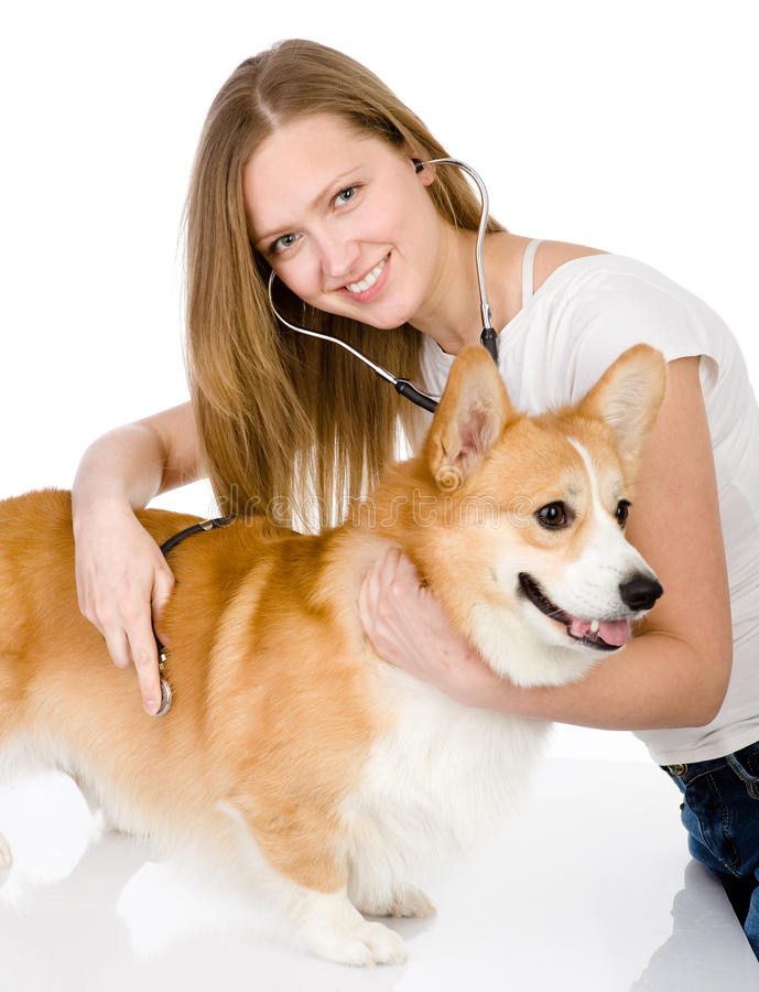 Vet checking the heart rate stock images