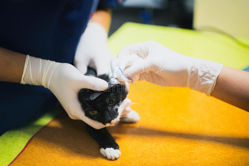 Vet Clinic - Wounded Cat stock image