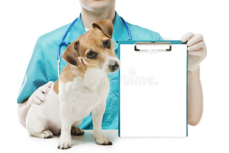 Vet clinick banner stock photos