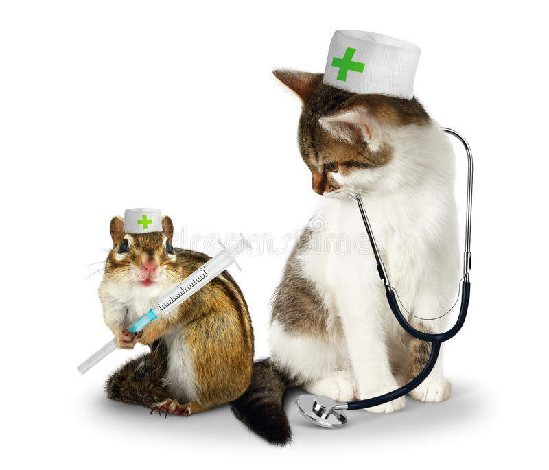 Vet concept, funny doctor chipmunk and cat with phonendoscope a stock photos