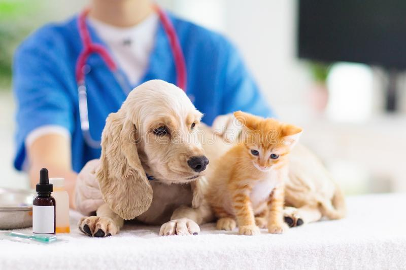 Vet with dog and cat. Puppy and kitten at doctor. Vet examining dog and cat. Puppy and kitten at veterinarian doctor. Animal clinic. Pet check up and vaccination stock images