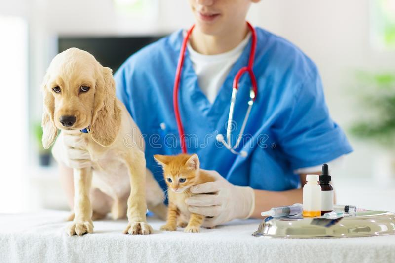 Vet with dog and cat. Puppy and kitten at doctor. Vet examining dog and cat. Puppy and kitten at veterinarian doctor. Animal clinic. Pet check up and vaccination royalty free stock photography