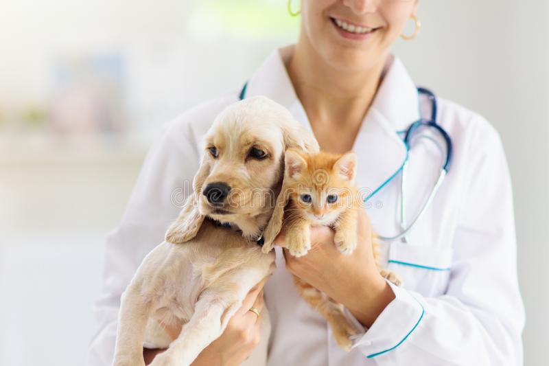Vet with dog and cat. Puppy and kitten at doctor. Vet examining dog and cat. Puppy and kitten at veterinarian doctor. Animal clinic. Pet check up and vaccination stock image