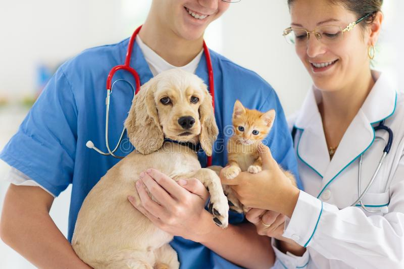 Vet with dog and cat. Puppy and kitten at doctor. Vet examining dog and cat. Puppy and kitten at veterinarian doctor. Animal clinic. Pet check up and vaccination royalty free stock photos