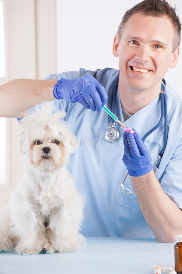 Download Vet Dog And Client Stock Image - Image: 30453331