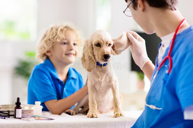 Vet with dog. Puppy at veterinarian doctor. Vet examining dog, little boy watching. Child and puppy at veterinarian doctor. Kids and pets. Animal clinic. Pet stock photo