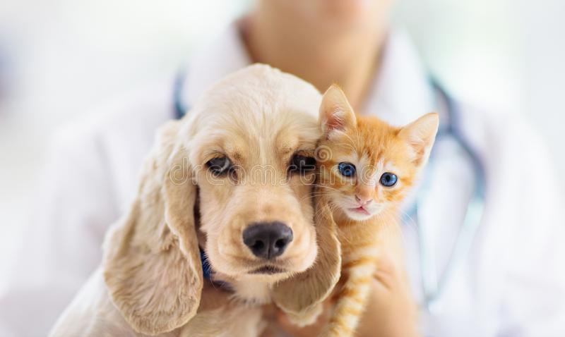 Vet with dog and cat. Puppy and kitten at doctor. Vet examining dog and cat. Puppy and kitten at veterinarian doctor. Animal clinic. Pet check up and vaccination royalty free stock images