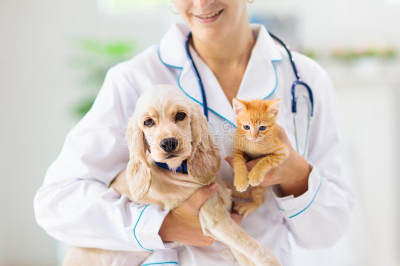 Vet with dog and cat. Puppy and kitten at doctor. Vet examining dog and cat. Puppy and kitten at veterinarian doctor. Animal clinic. Pet check up and vaccination stock photos