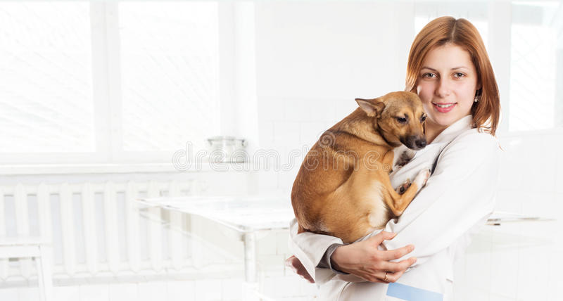 Vet female with a dog royalty free stock image