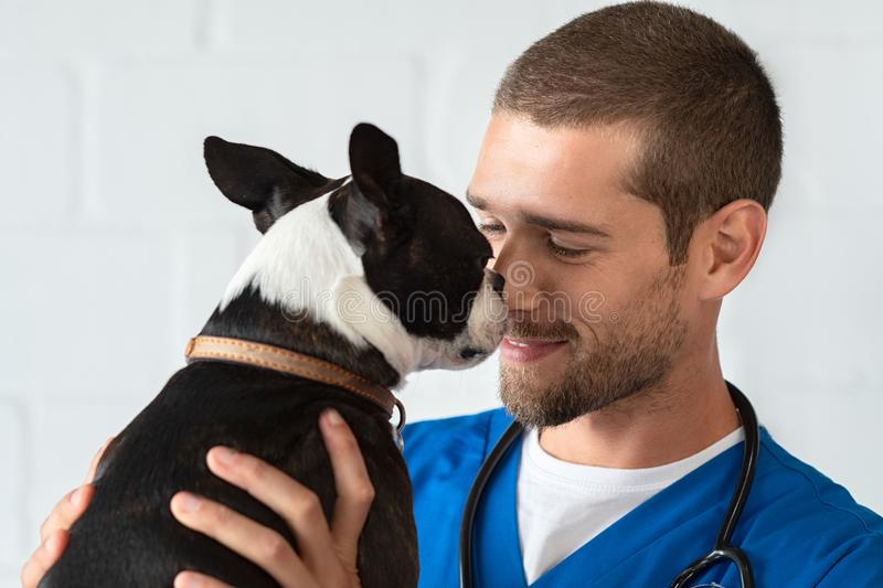 Vet loving pet dog. Young vet playing with boston terrier at clinic. Smiling veterinarian with stethoscope loving little dog in hospital after checkup. Cute stock photography