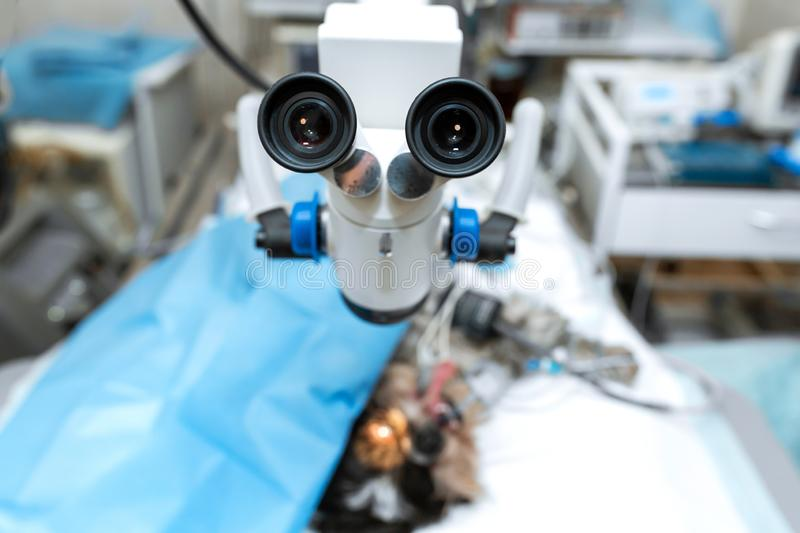 Vet ophthalmologist surgical microscope in operating room. and dog with injured eye on operating table, ready for operation.  royalty free stock image