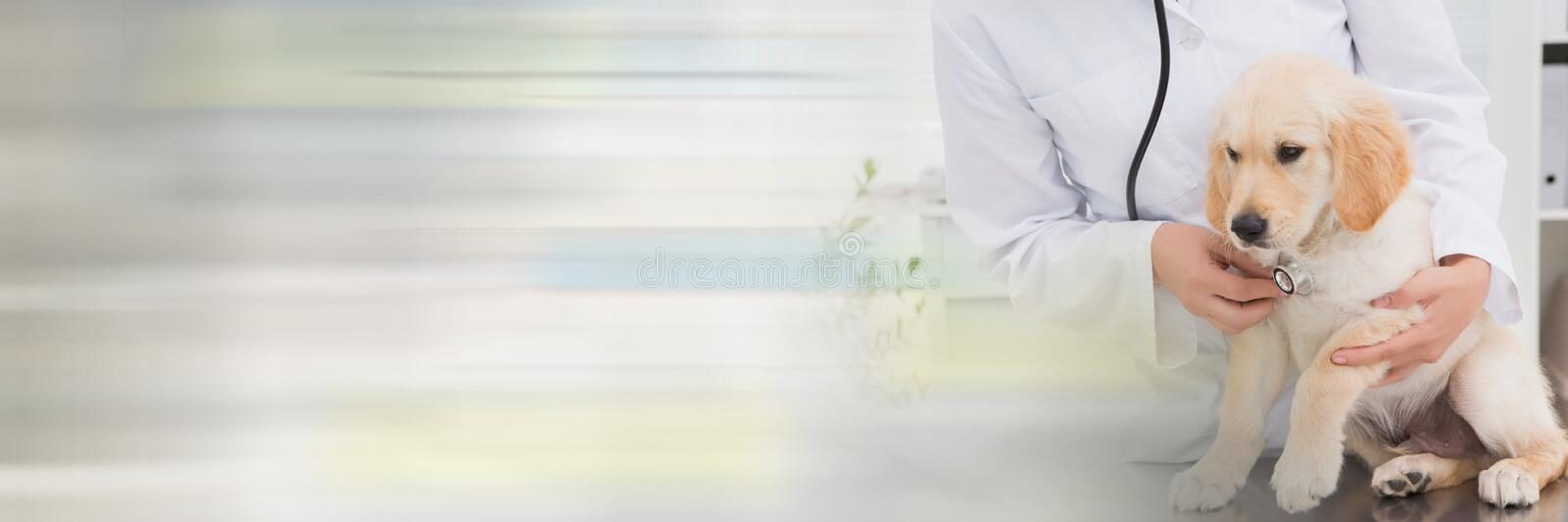 Vet woman taking care of a puppy royalty free stock photo