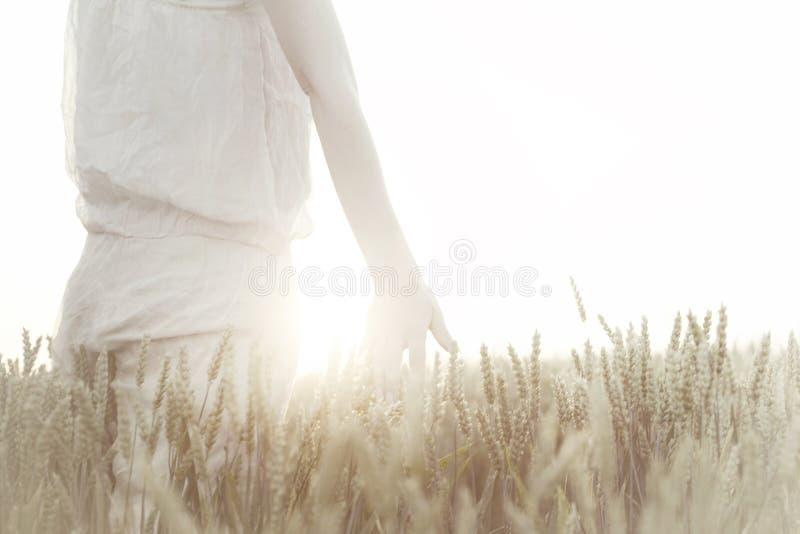 Vete för handen för kvinna` s gå i ax rörande på solnedgången royaltyfri fotografi
