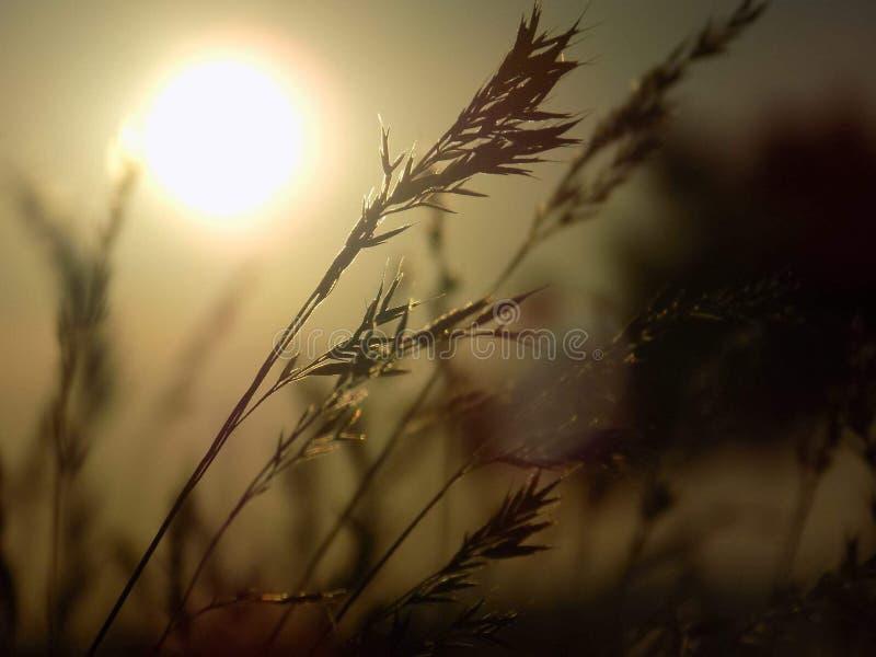 Vete som är härligt, landskap, natur, växter, arkivbild
