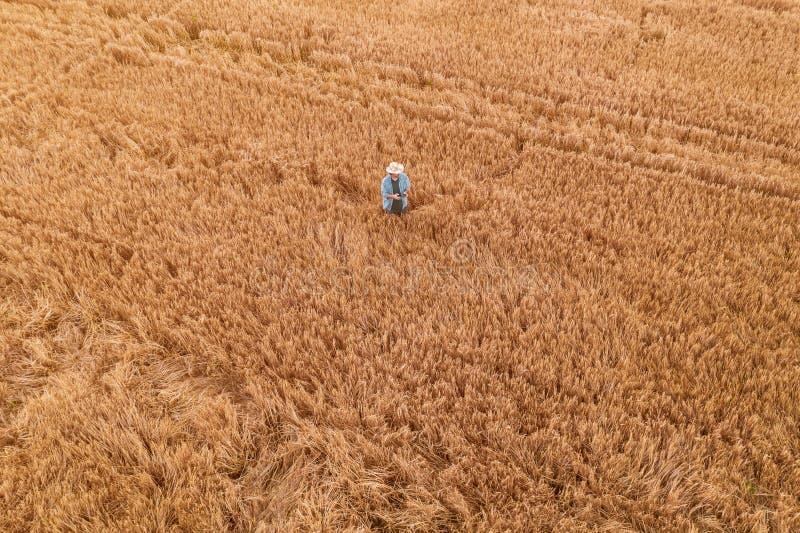 Vetebonde med den avlägsna kontrollanten för surr i fält arkivfoto