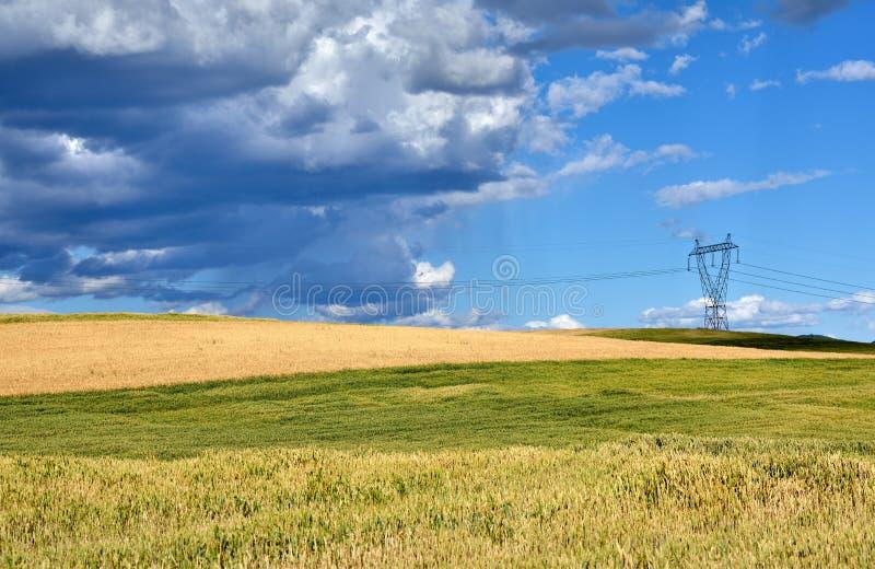 Vetefält i Makedonien royaltyfria bilder