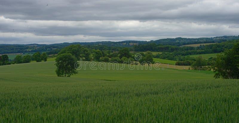 Vetefält med skogar och himmel i bakgrund royaltyfri bild