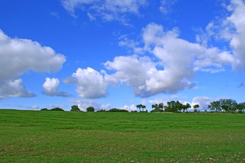 Vetefält och blå himmel med vitmoln- och trädbakgrund royaltyfria foton