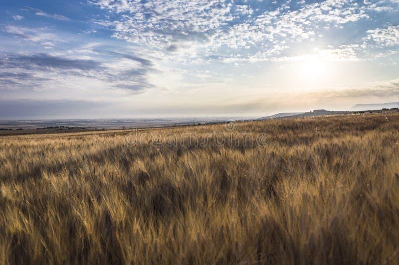 Vetefält och solnedgång royaltyfri bild