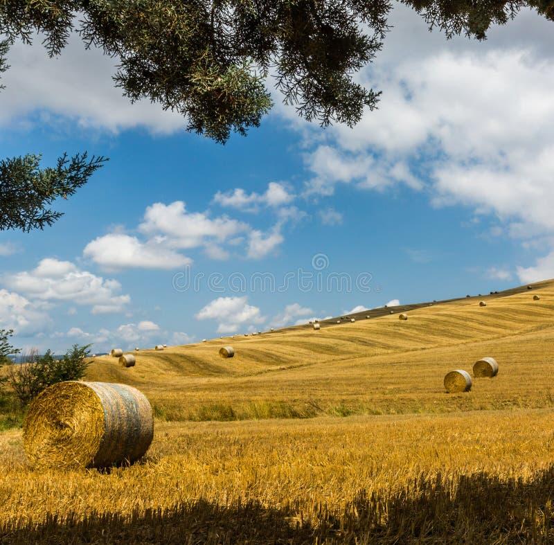 Vetefält som skördas för en tid sedan i Tuscany arkivfoto