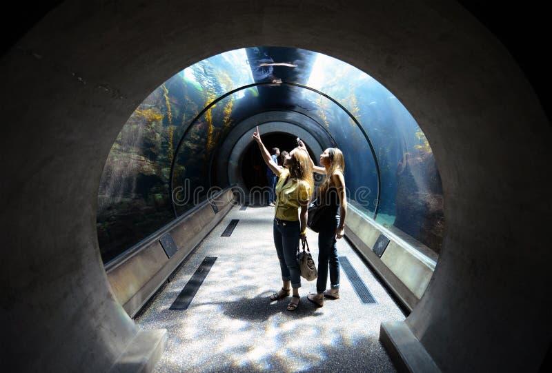 Vetenskap och under på akvariet av det Stillahavs- i Long Beach, Kalifornien arkivfoto