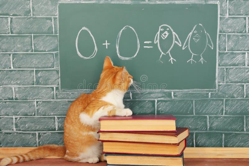 Vetenskaplig katt royaltyfri fotografi
