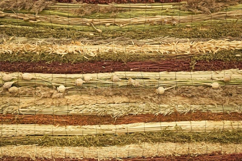 Veteråghavre sädes- korn, vallmo örter gräs stammar arkivbild