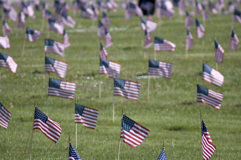Veteran's Flags stock photography