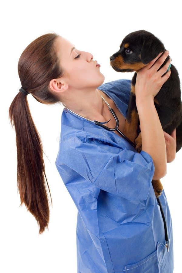 veterinário foto de stock