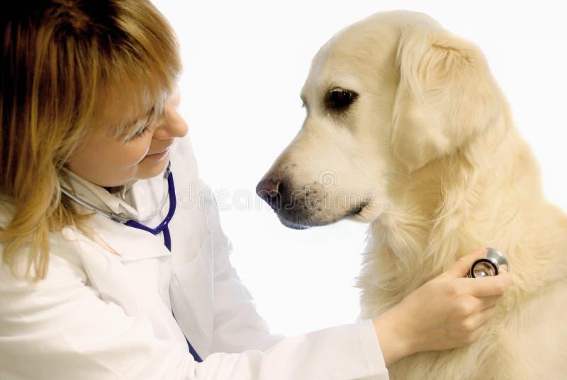 Veterinário com cão fotografia de stock royalty free