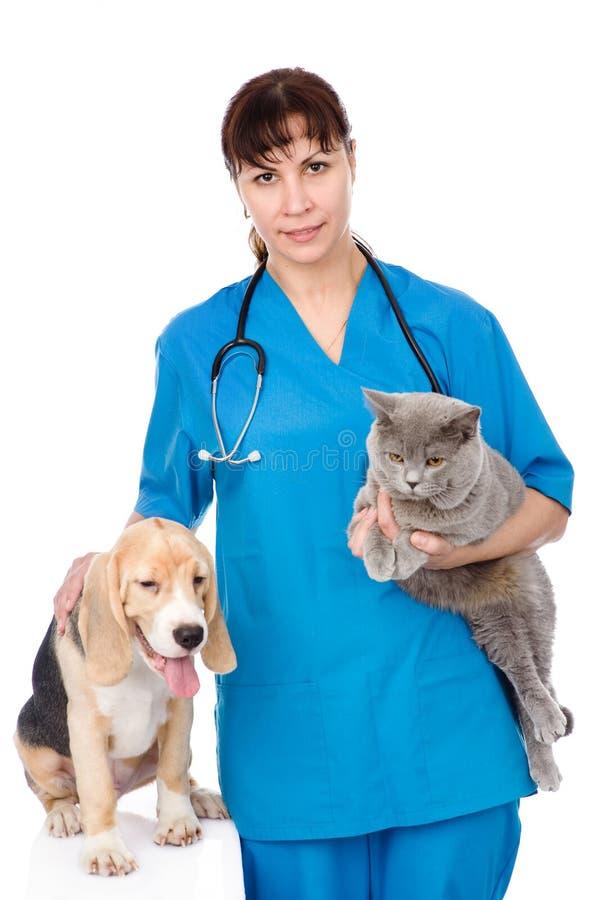 Veterinário com gato e cão Isolado no fundo branco fotografia de stock